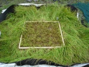 Prélèvement de biomasse végétale